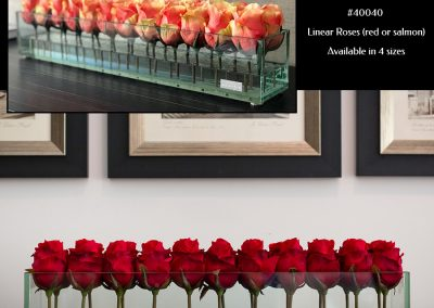 #40040-Linear-Roses