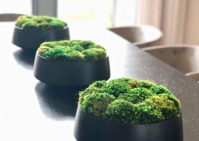 8-Moss-Art